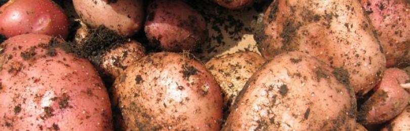 Чем заменить картошку
